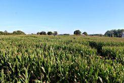 Harbes Farm, Mattituck LI